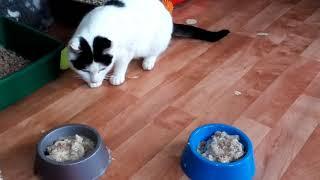 Шурочка, игривая молодая кошечка, ждет тебя в приюте Лучший друг г. Тюмень