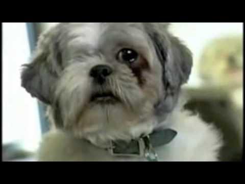 22 sec clip of aspca commercial m4v youtube