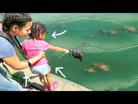Toddler Feeds Wild Turtle Squad!
