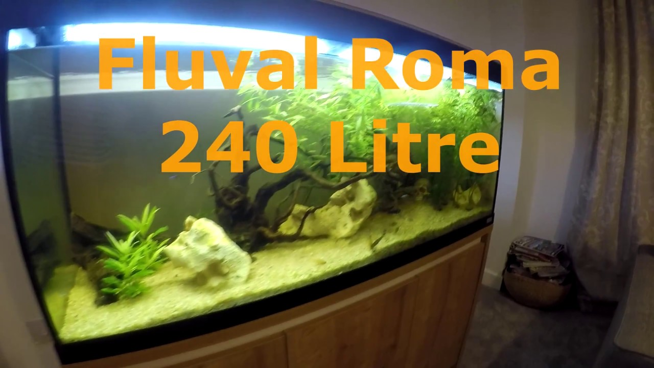 fluval roma 240 litre fish tank set up aquarium youtube. Black Bedroom Furniture Sets. Home Design Ideas