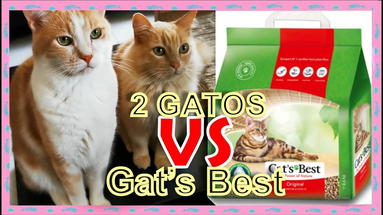ARENA A PRUEBA DE GATOS/ 2 GATOS VS  CAT´S BEST