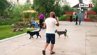 Бездомные собаки атаковали парк Дома офицеров в Чите