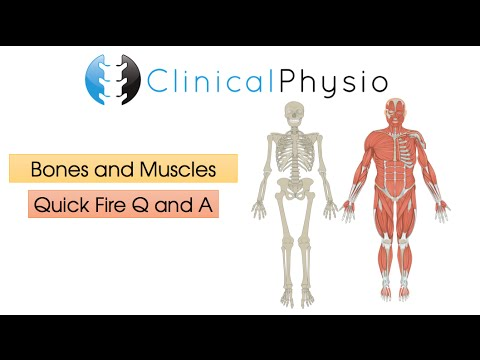 Quick Fire Q & A: Bones and Muscles | Clinical Physio