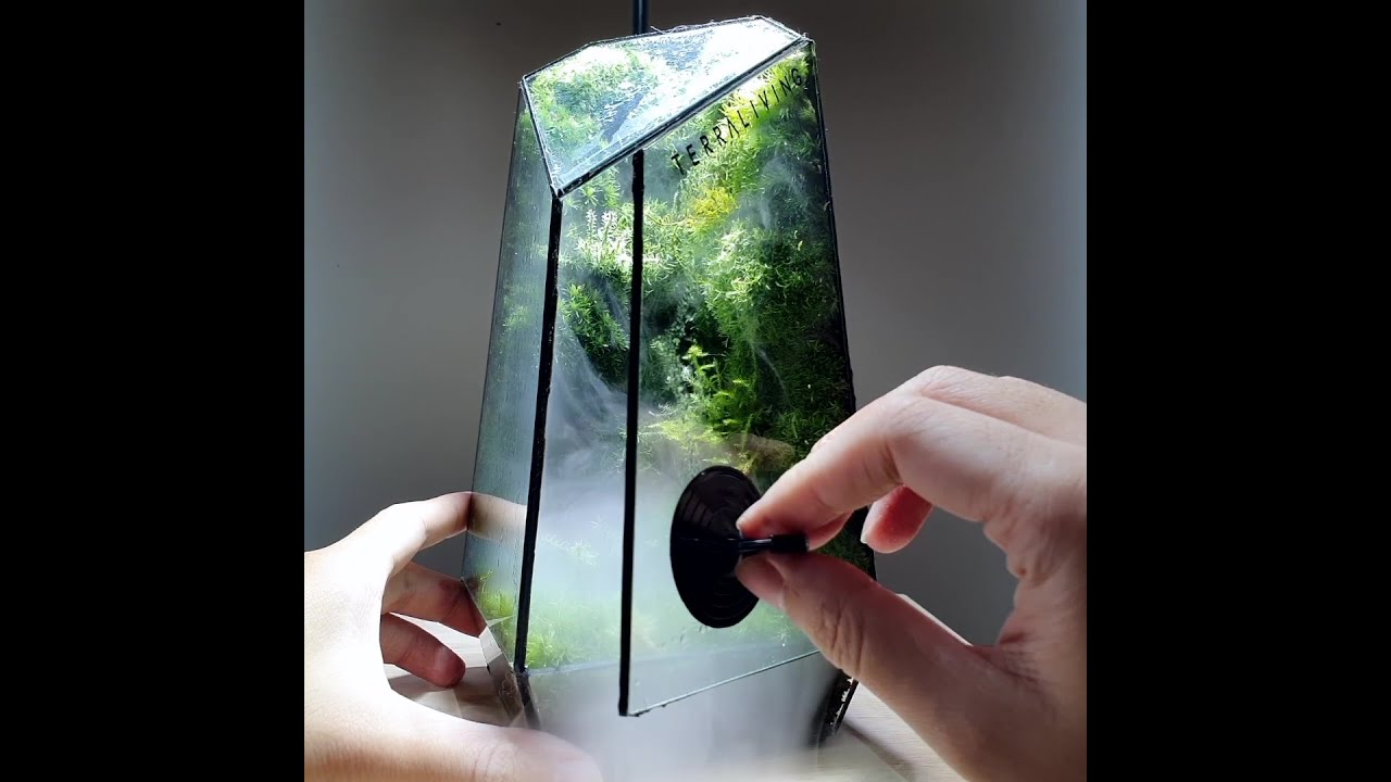 Satisfying Living Moss Wall Terrarium, The Vertex - Cloud Forest by TerraLiving