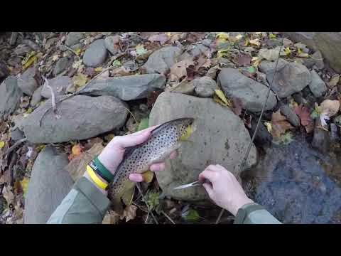 Fly Fishing The Catoctin Mountains SLAM Of Trout