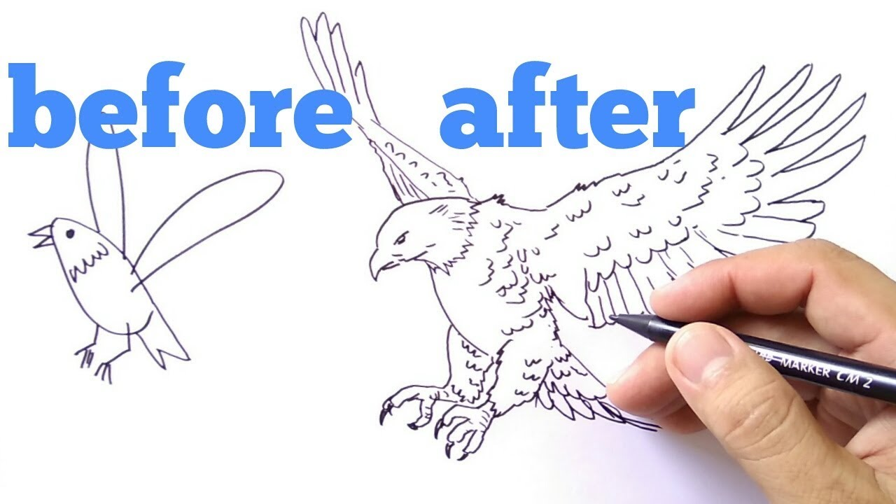 How To Draw Eagle Cara Menggambar Elang