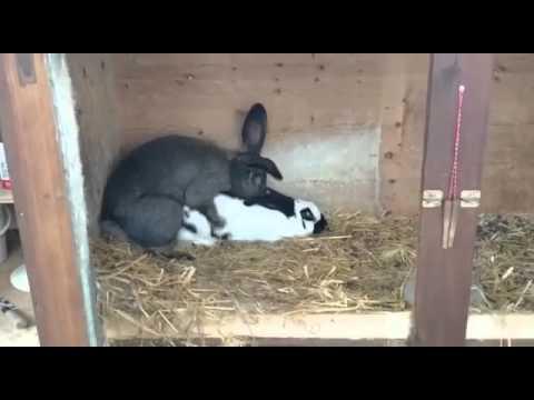 Голодный кролик атакует фото