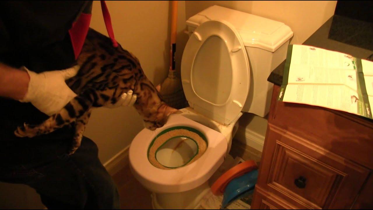 cat not using new litter box