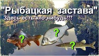''Рыбацкая Застава'' - платник в центре города. Есть ли рыба? Стоит ли платить?