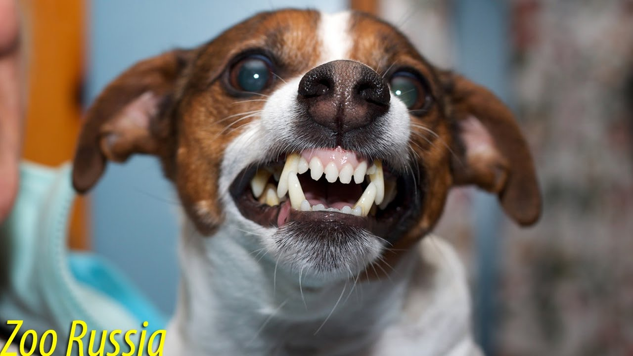 Hi Funny Dog Pictures