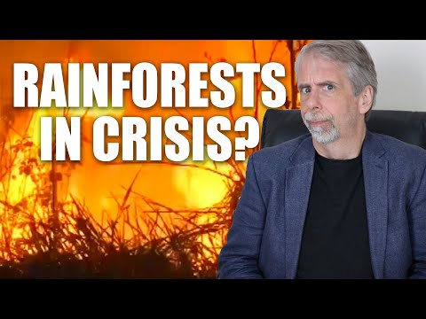 Rainforests In Crisis! The Amazon In Flames