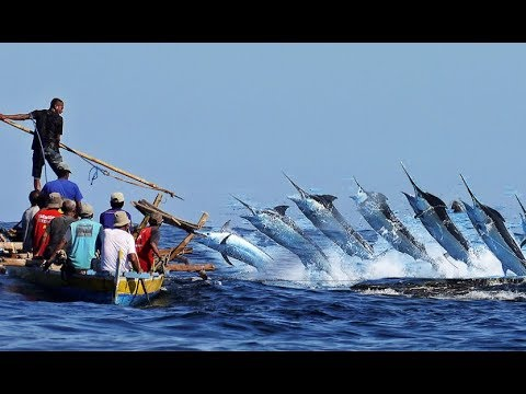 Black Marlin Gold Fishes Coast Blue Catch With Boat