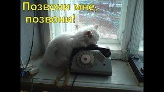 Замир Пашаев -  Позвони