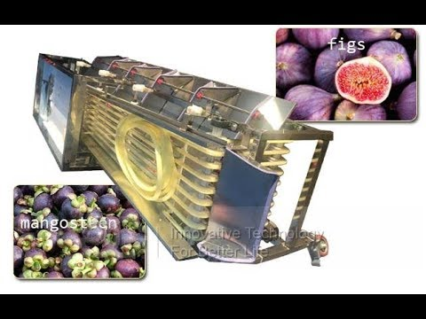 Fruit Size Sorting Machine|Tomato Cherry Berry Grading Machine