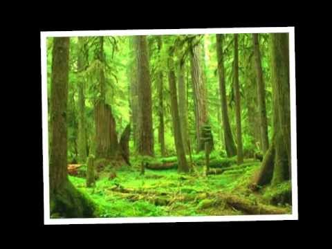 Forest Field  - Pioneers Of The Future EPK