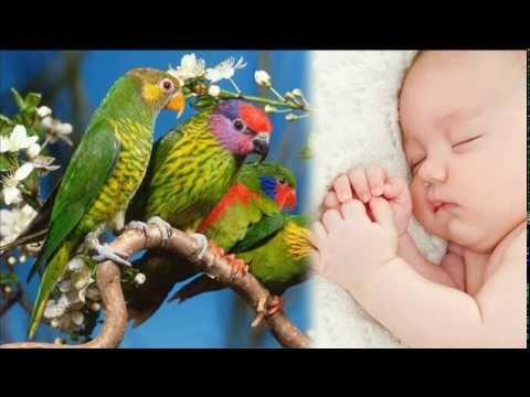 Vögel singen   Erstaunlich Schlaf Trick   Baby Einschlaf-Hilfe