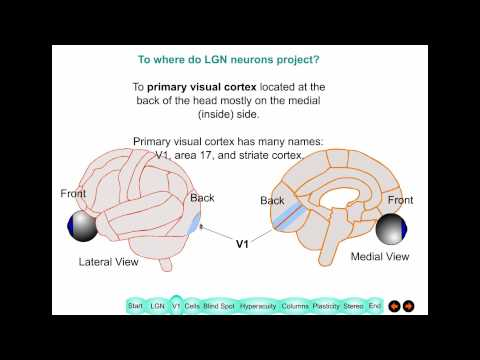 Lecture 2 Primary Visual Cortex 2015HD
