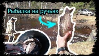 Рыбалка на Ручьях. (Промысел)! Зеленым не смотреть)))