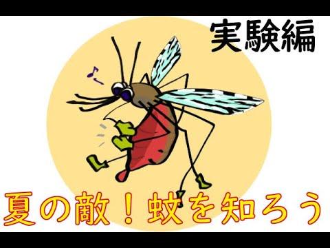 夏の敵!蚊を知ろう~実験編~