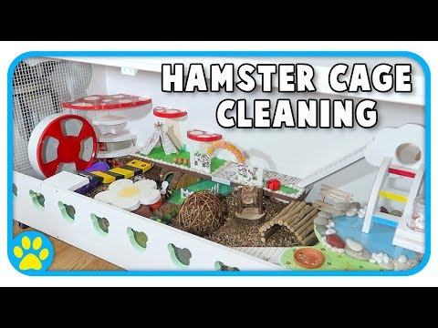 Cleaning Out Iodine's Hamster Cage | The Beaker Cage