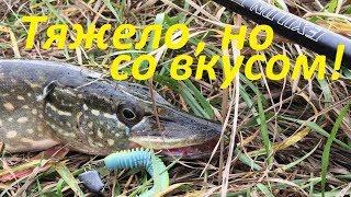 Осення рыбалка в компании Хорошую щуку добил блесной Рыбалка спиннингом
