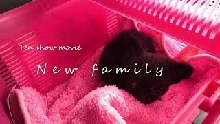 20170224 本日新しい家族がやってきました。 名前は天ちゃんです。 チワ...