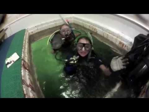 Kids in the Keys   Jules' Undersea Lodge2