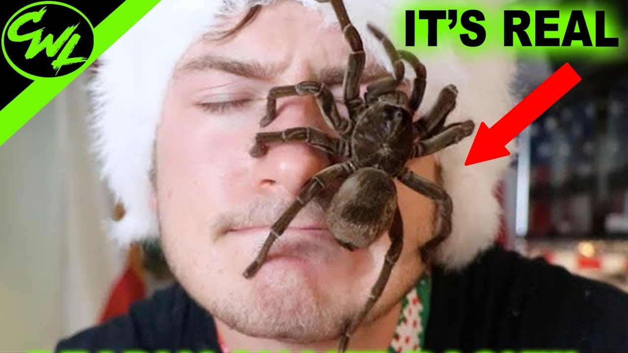 WORLD'S BIGGEST SPIDER!!!!