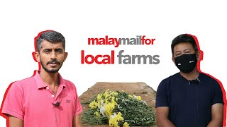 Trouble for Cameron Highlands' flower farms due to the lockdown | Malay Mail For: Local Farms in MCO