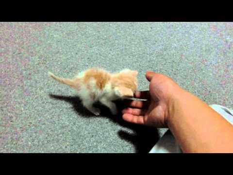 息子が赤ちゃんねこ拾ってきた♪名前は「あいる」です♪ my son brought home a kitten .