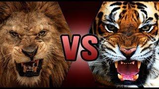 اقوى مقارنة بين الأسد والنمر + قتال حقيقي - الأسد VS النمر | من الأقوى ؟ HD