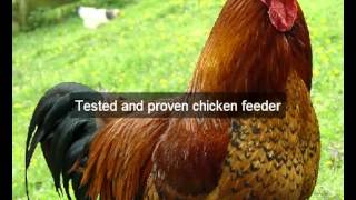 Chicken Feeders | Nevada | Ca | Automatic Chicken Feeder | Feeding Chickens | Poultry Feeders | Hens