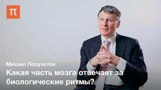 Сон и биоритмы — Михаил Полуэктов / ПостНаука