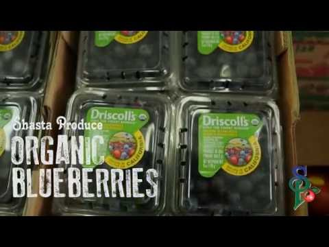 Organic California Blueberries | Shasta Produce