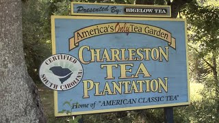 South Carolina Tea Plantation Popular Stop On Recent GFB Farm Tour