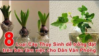 8 Loại Cây Thủy Sinh dễ trồng đặt trên bàn làm việc cho Dân Văn Phòng