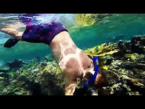 Underwater Wildlife in the Bahamas