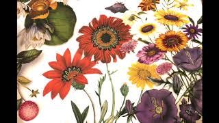 Mon Jardin botanique ou le théâtre des fleurs...