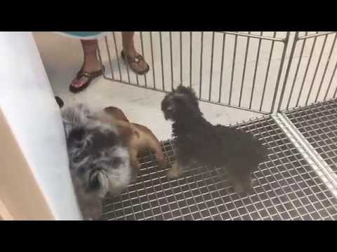 Cute Puppies. Behind The Scenes - Escape in West Ridge Mall - Making of the commerical.