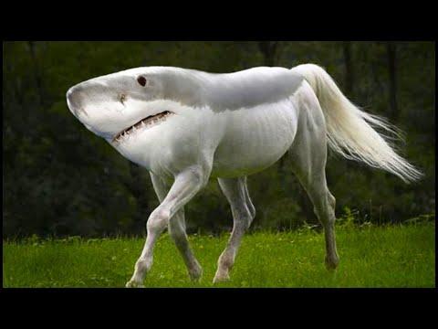 Не Фотошоп! Настоящие Животные МУТАНТЫ