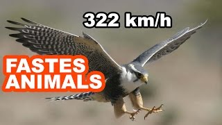 Top 7 Fastest Animal In The World -  Lucky7s
