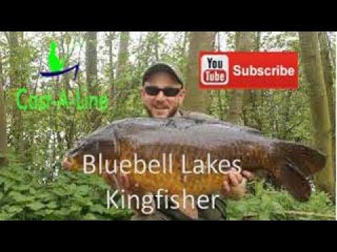 Carp Fishing Bluebell Lakes Kingfisher