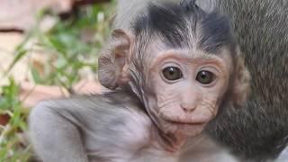 Super cute baby monkey, Adorable newborn monkey