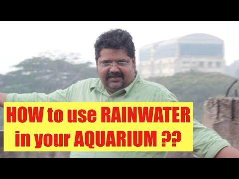 How To Use Rainwater In Aquarium, Rainwater Harvesting Planted Aquarium, Rainwater Good For Aquarium