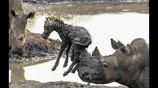 UNBELIEVABLE Animals That Saved Other Animals Life. | Animal Heroes. | WorldHub TV