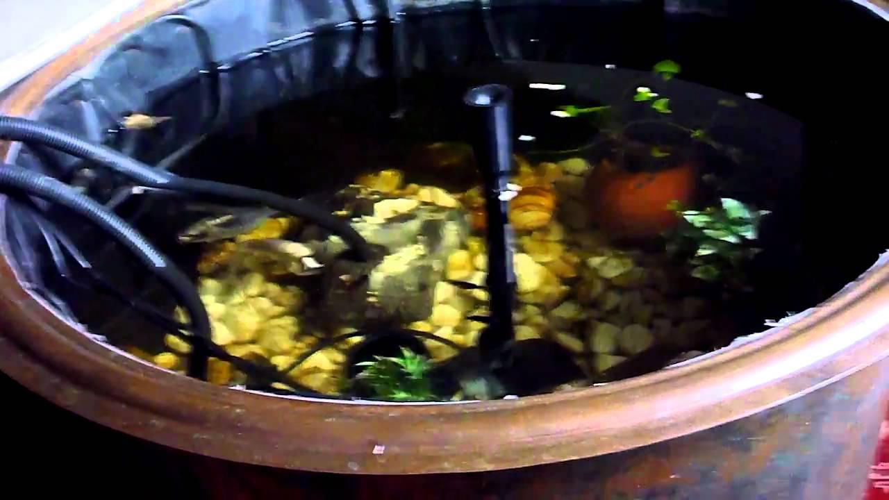 Koi teich zimmerteich kupferkessel fisch fische angeln for Fressen kois kleine fische