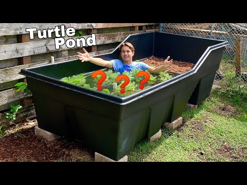 *NEW* GIANT TURTLE POND ! WHAT DID WE PUT IN IT ??