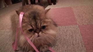 しゃべる猫「かわいい」.mp4