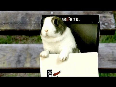 Chaud lapin à contrôler dans Var 83350