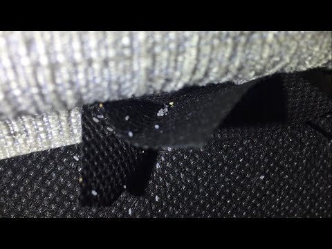 Bed Bugs - What do the eggs look like?